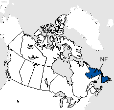 Newfoundland and Labrador Area Code Map